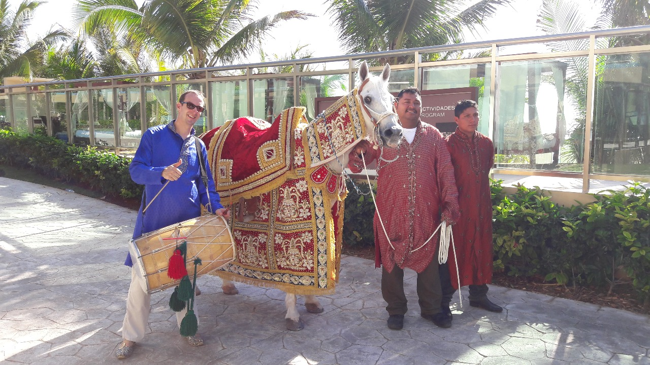 Horse For Baraat And Dhol