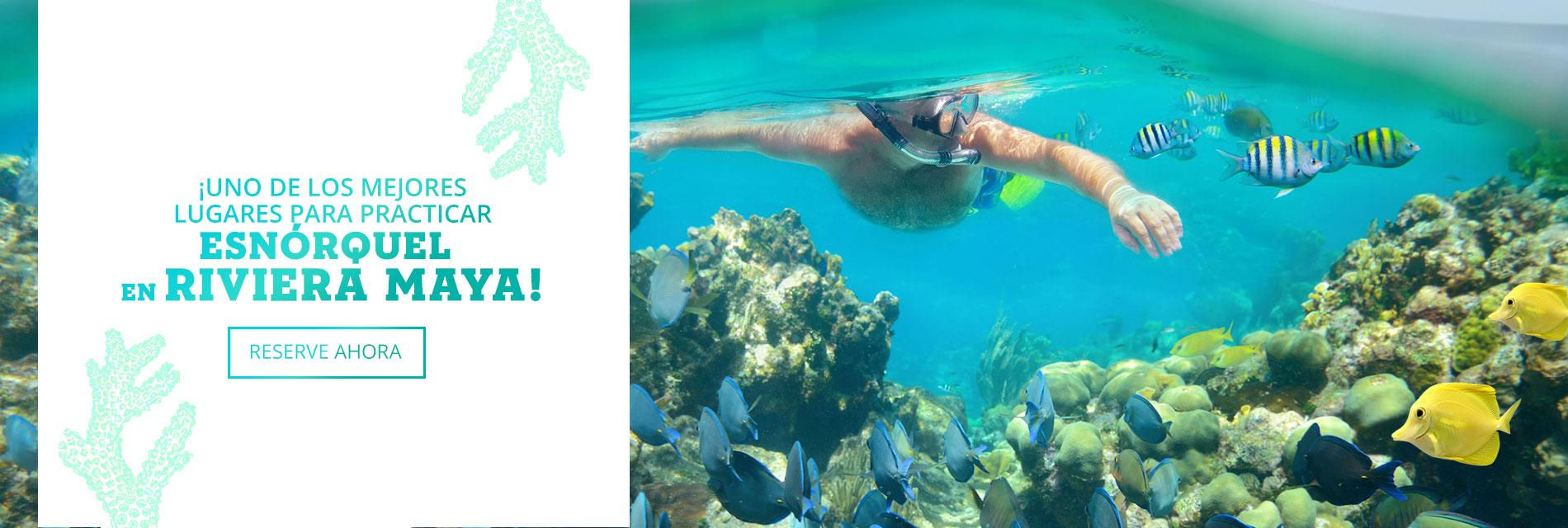 Snorkel Pto Morelos